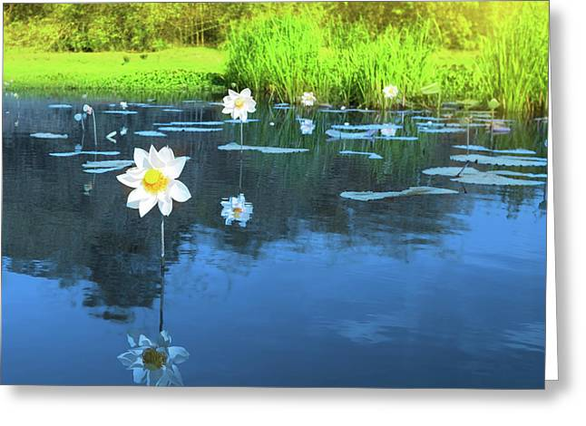 Innocence Greeting Cards - Lotus flower Greeting Card by MotHaiBaPhoto Prints