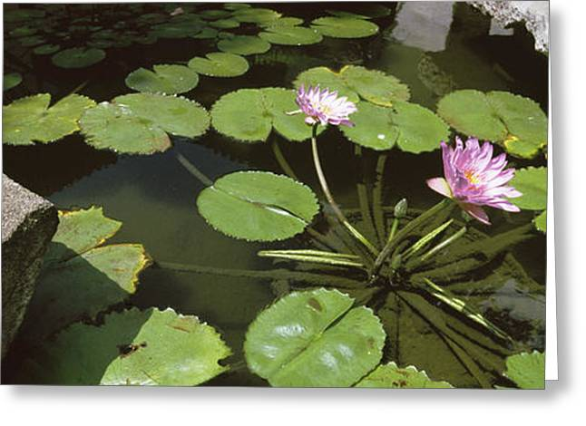 Lotus Flowers And Lilypads In A Pond Greeting Card by Panoramic Images