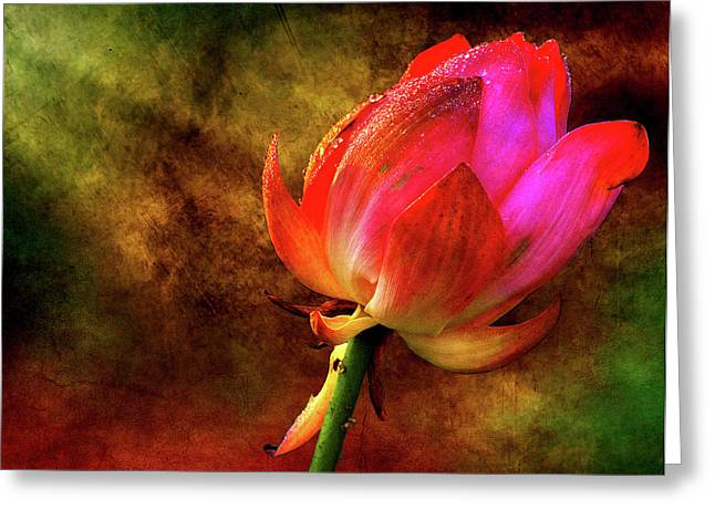 Lotus In Texture - A Present For A Friend Greeting Card by Rohit Chawla