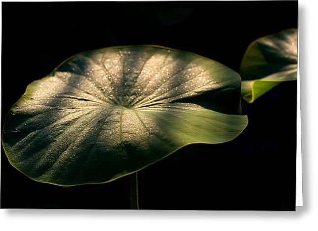 Lotus Leaves Morning  Shower Greeting Card by Catherine Lau