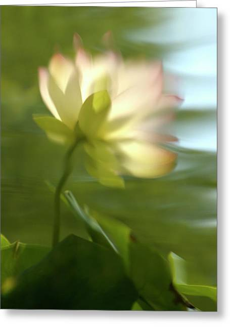 Lotus Reflection Greeting Card