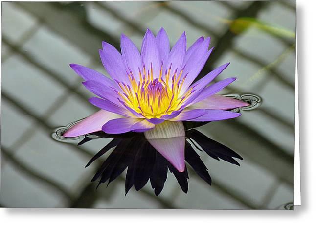 Lotus Greeting Card by Vari Buendia