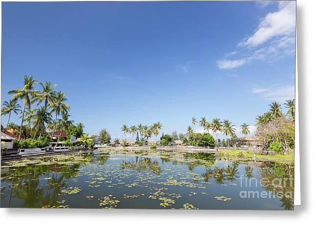 Lotus Water Lilies Growing In The Lagoon At Candidasa, Bali, Ind Greeting Card by Roberto Morgenthaler