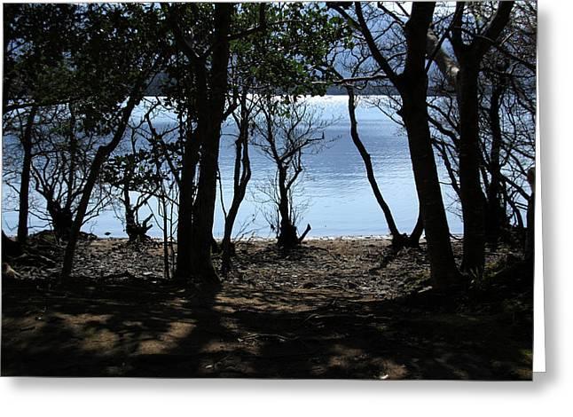 Lough Leane Through The Woods Greeting Card by Aidan Moran