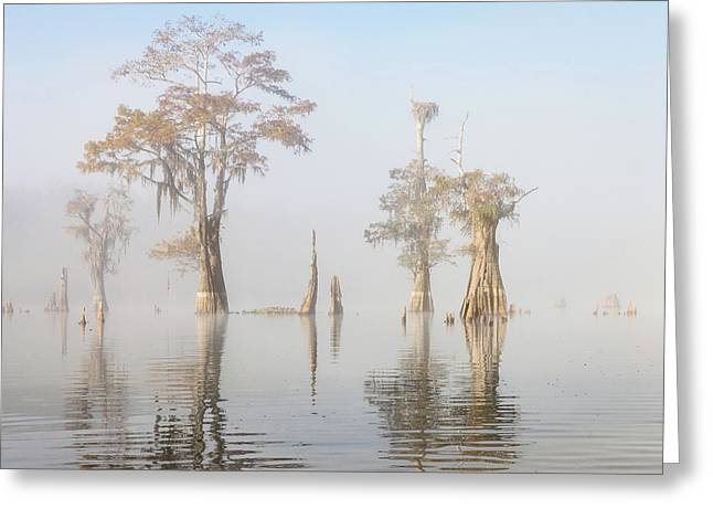 Louisiana Cypress Swamp On A Foggy Morning Five Greeting Card by Bill Swindaman