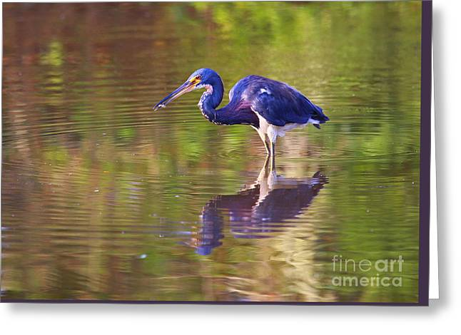 Louisiana Heron Greeting Card by Marty Fancy