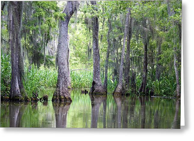 Louisiana Swamp 5 Greeting Card by Inspirational Photo Creations Audrey Woods