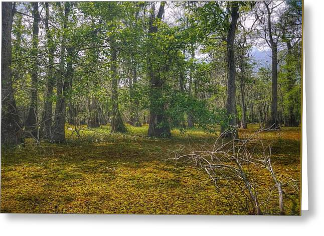 Louisiana Swamp Greeting Card