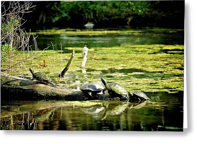 In-city Digital Art Greeting Cards - Louisiana turtles  Greeting Card by Alicia Morales
