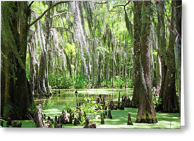Louisiana Swamp Greeting Card by Inspirational Photo Creations Audrey Woods