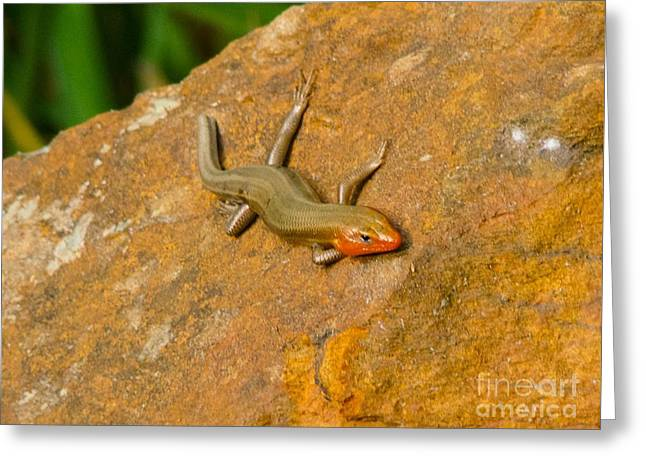 Lounging Lizard Greeting Card