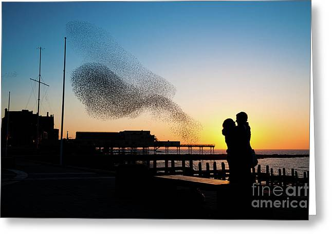 Love Birds At Sunset Greeting Card