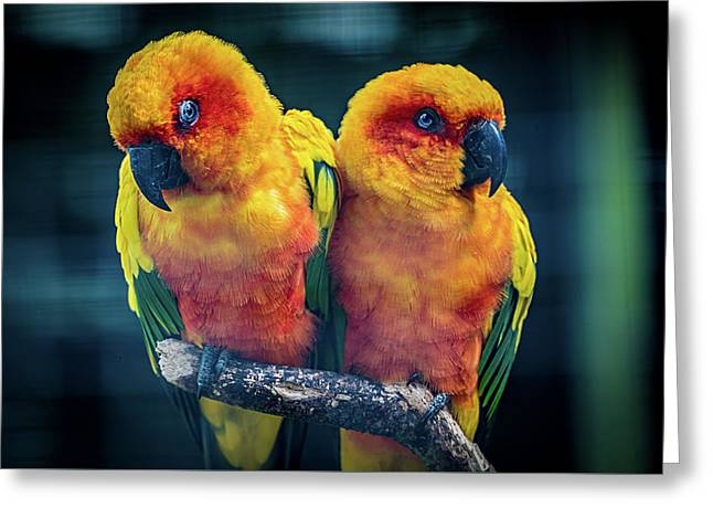 Greeting Card featuring the photograph Love Birds by Chris Lord