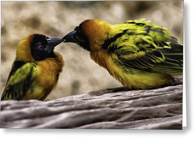 Love Birds Greeting Card by Martin Newman