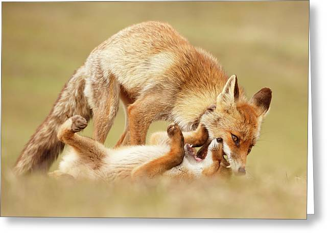Love Bites - Mother Fox And Fox Kit Greeting Card