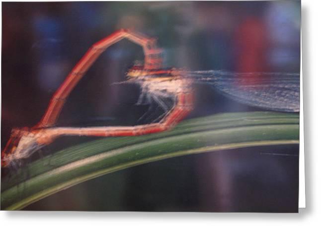 Love Bug Greeting Card by Frankie Graham