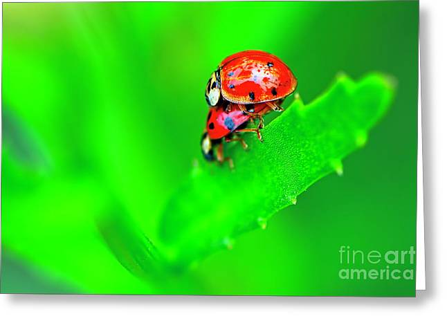 Greeting Card featuring the photograph Love Bugs by Sharon Talson