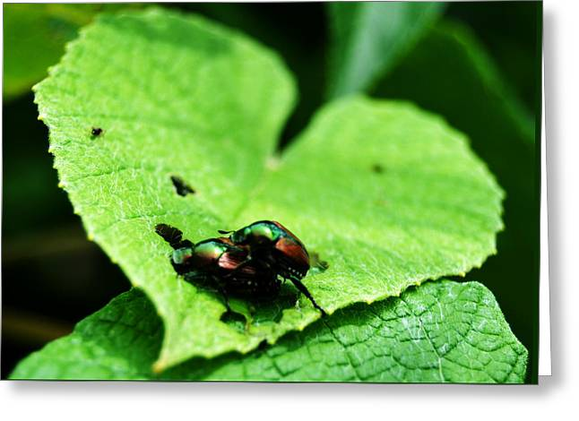 Greeting Card featuring the photograph Love Bugs by W And F Kreations