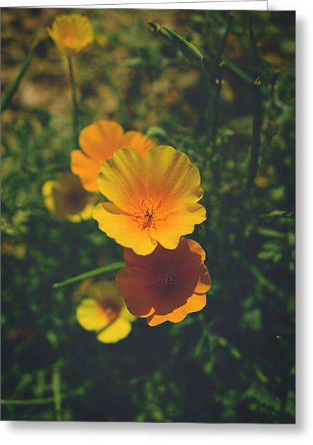 Love Comes Home Greeting Card by Lucinda Walter
