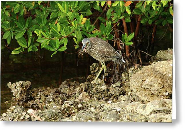 Love Crabs For Lunch Greeting Card by Christiane Schulze Art And Photography