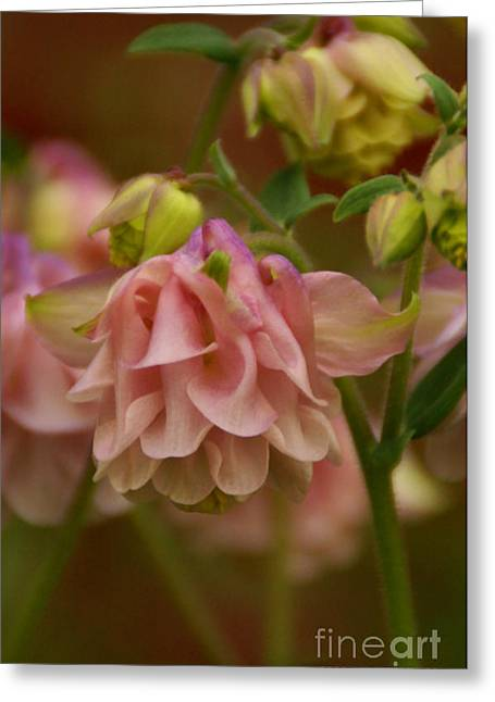 Greeting Card featuring the photograph Love Everlasting by Linda Shafer