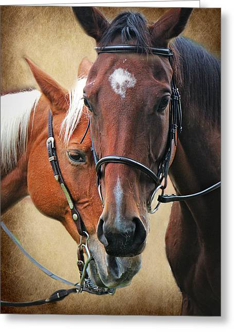 Love Horses Greeting Card by Lorella  Schoales