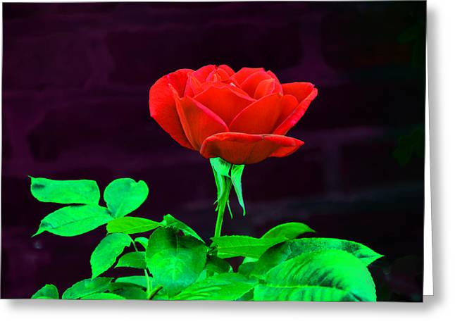 Love Is A Rose Greeting Card