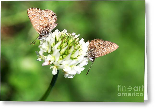 Love Moths Greeting Card by Jorgo Photography - Wall Art Gallery