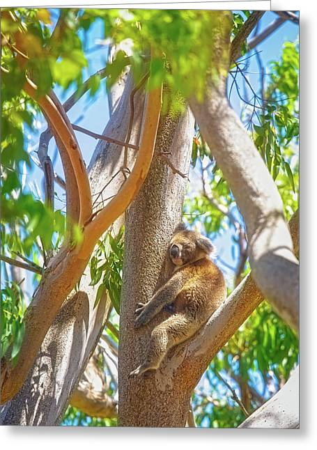 Love My Tree, Yanchep National Park Greeting Card