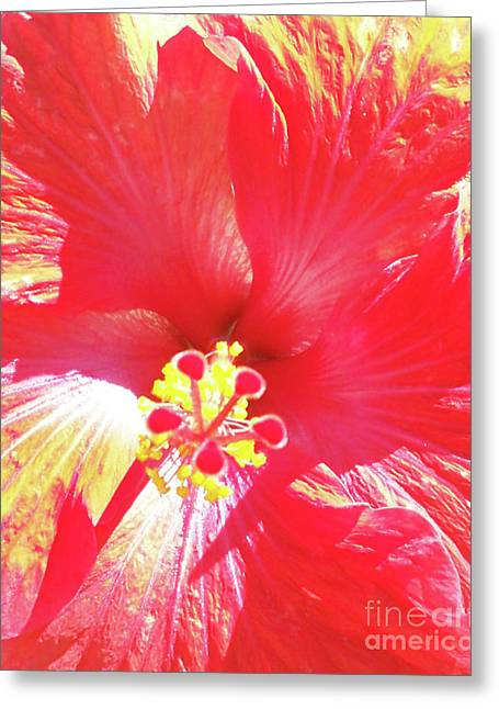 Love Of Hibiscus Greeting Card by Chris Andruskiewicz