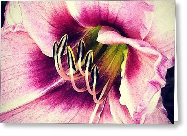 Love These Day Lilies :) #flower Greeting Card