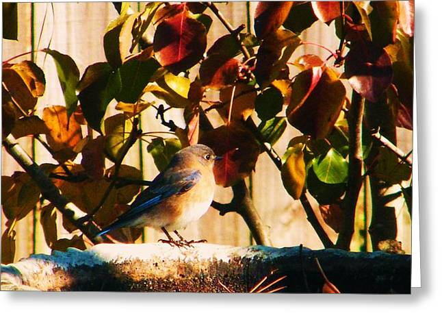 Love To See You Here Colorful Bird Greeting Card by Nereida Slesarchik Cedeno Wilcoxon