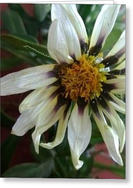 Loveflowers Greeting Card by Bali Chadha