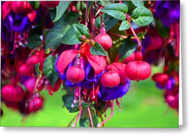Lovelier Fushia Greeting Card
