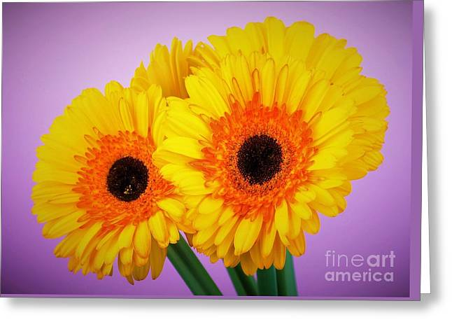 Lovely And Beautiful - Gerbera Daisies Greeting Card