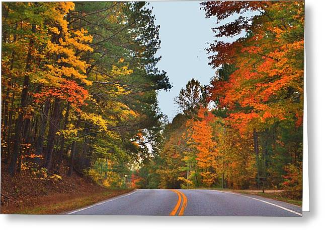 Lovely Autumn Trees Greeting Card