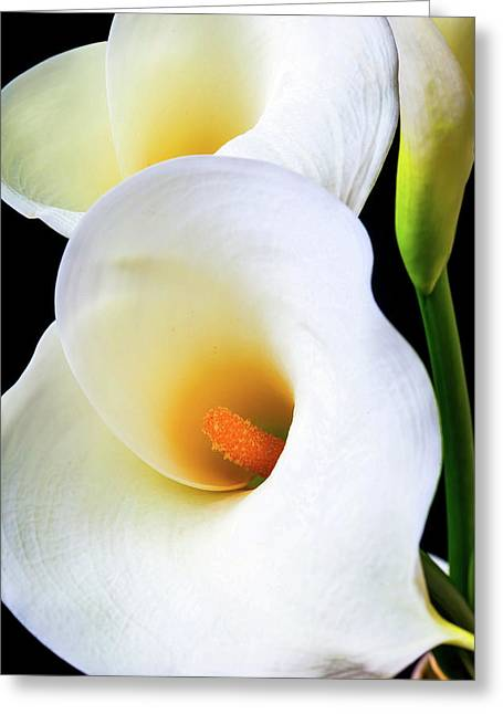Lovely Beautiful Calla Lily Greeting Card