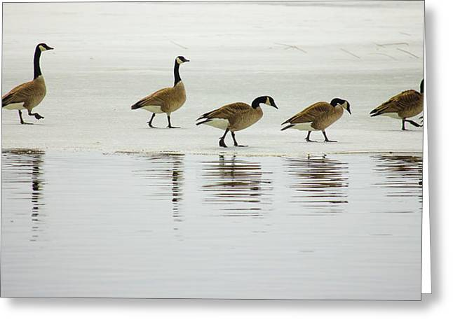 Lovely Day For A Stroll Greeting Card