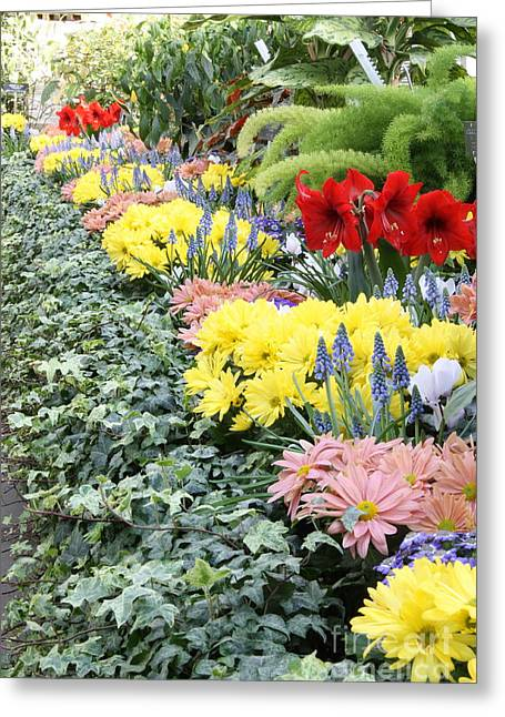 Lovely Flowers In Manito Park Conservatory Greeting Card by Carol Groenen