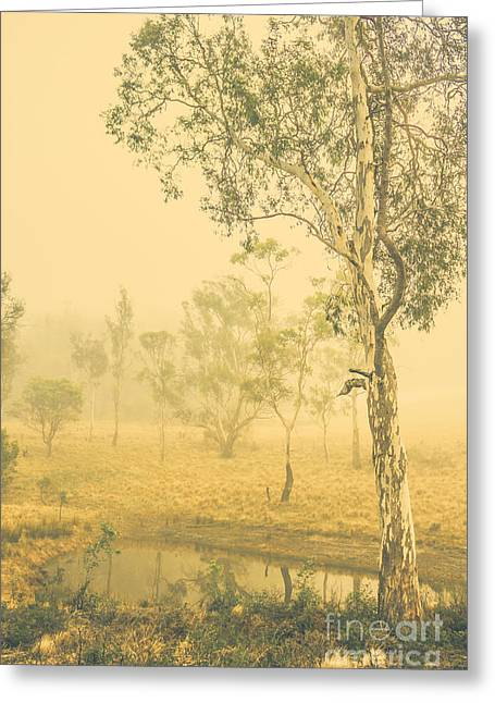 Lovely Foggy Woodland Greeting Card by Jorgo Photography - Wall Art Gallery