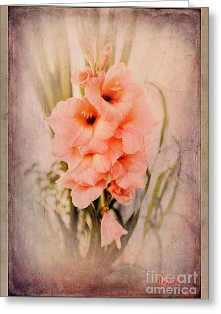 Lovely Gladiolus Greeting Card
