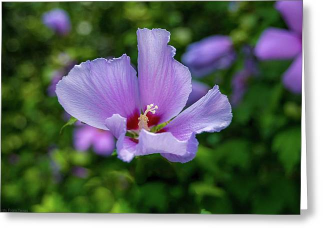 Lovely Hibiscus Greeting Card