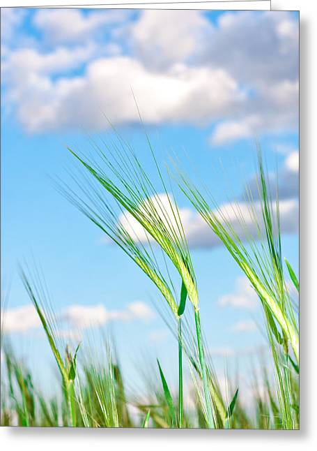 Lovely Image Of Young Barley Against An Idyllic Blue Sky Greeting Card