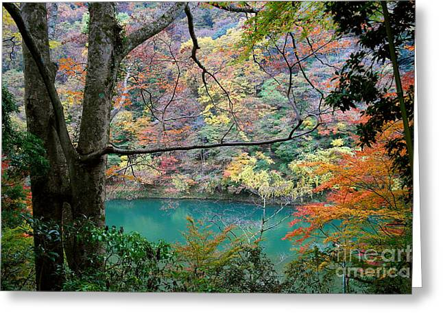 Lovely Landscape By Tim Wilson Greeting Card