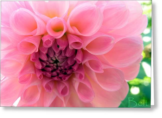 Lovely Linda Greeting Card by Christine Belt