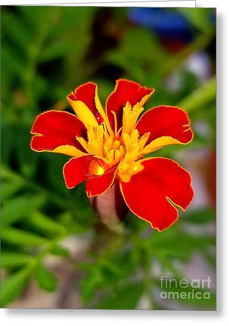 Lovely Little Flower Greeting Card