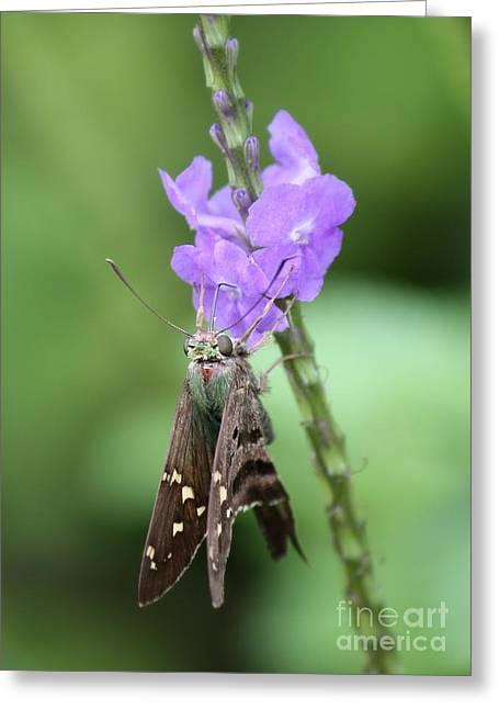 Lovely Moth On Dainty Flower Greeting Card