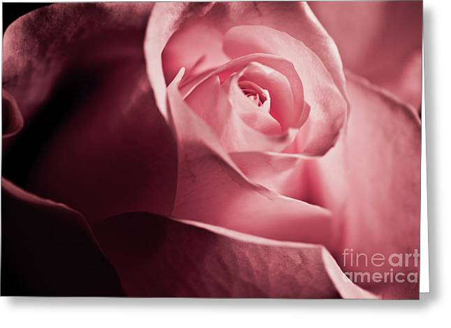Greeting Card featuring the photograph Lovely Pink Rose by Micah May