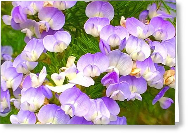 Lovely #purple #flowers Beg Your Greeting Card