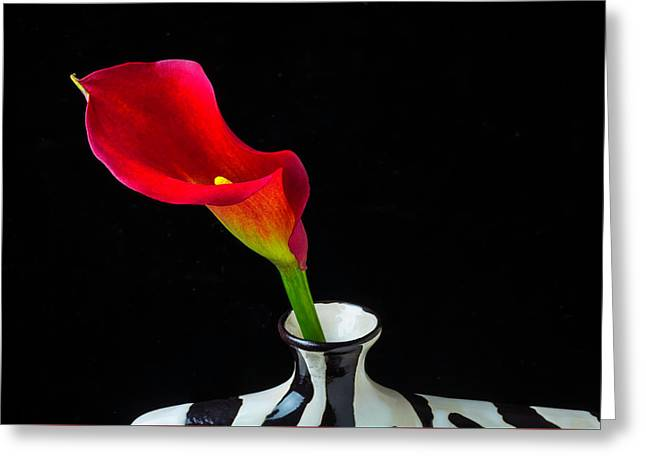 Lovely Red Calla Lily Greeting Card by Garry Gay
